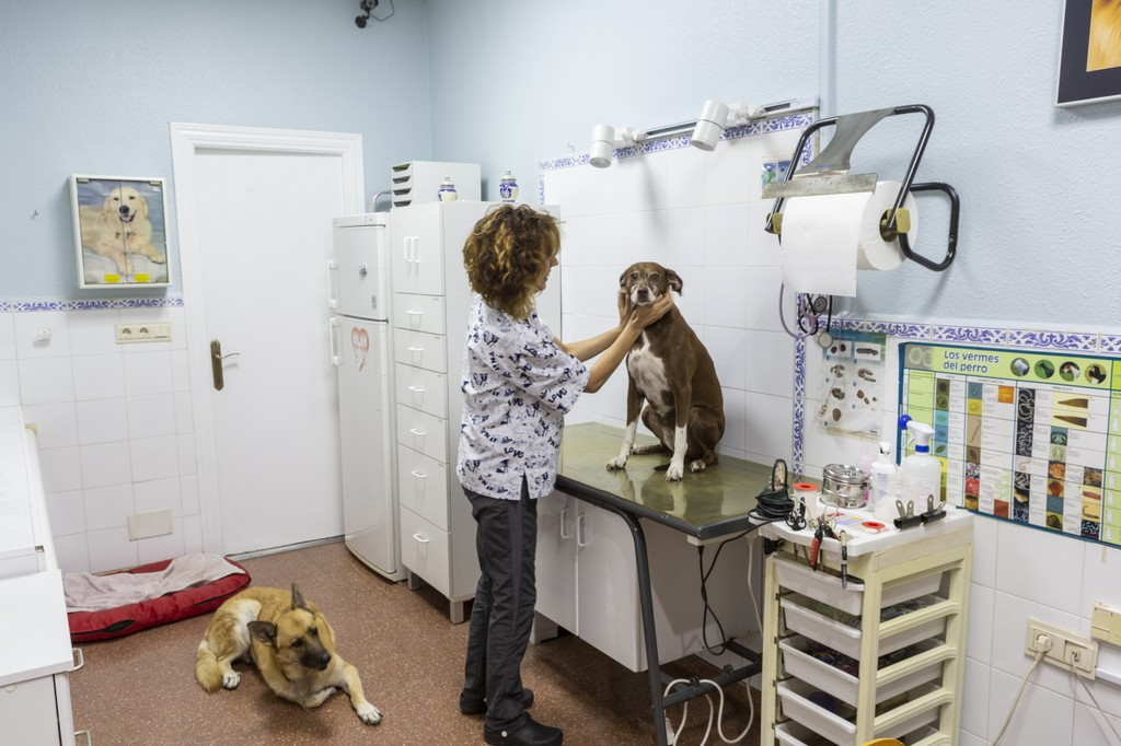clinica_veterinaria_cortijogrande9.jpg